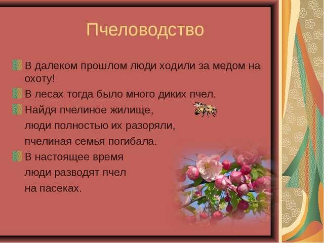 Пчеловодство В далеком прошлом люди ходили за медом на охоту! В лесах тогда...