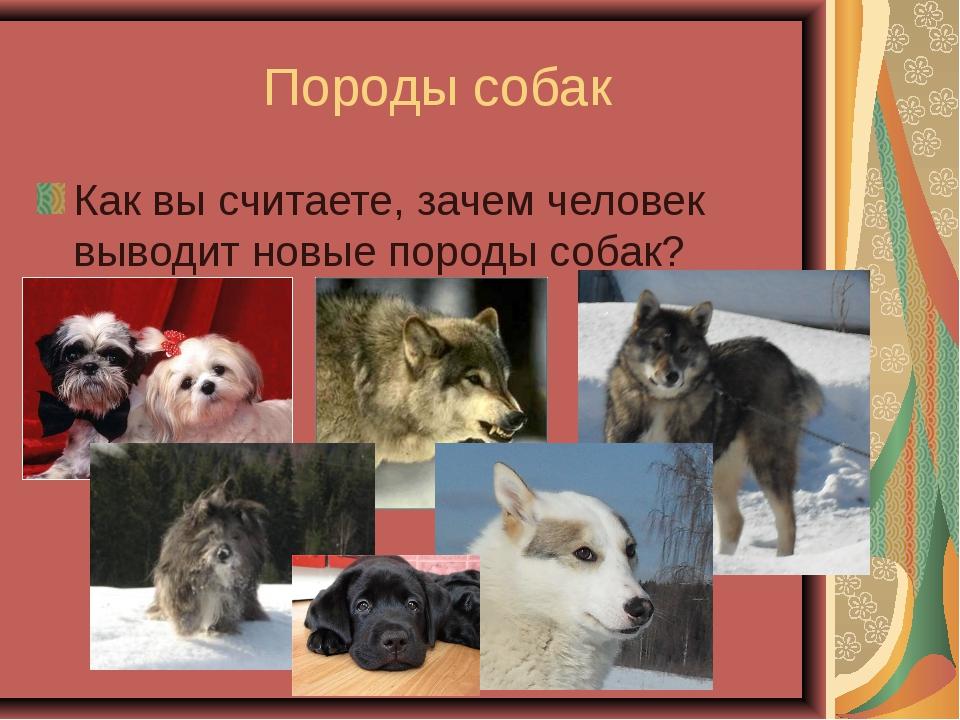 Породы собак Как вы считаете, зачем человек выводит новые породы собак?