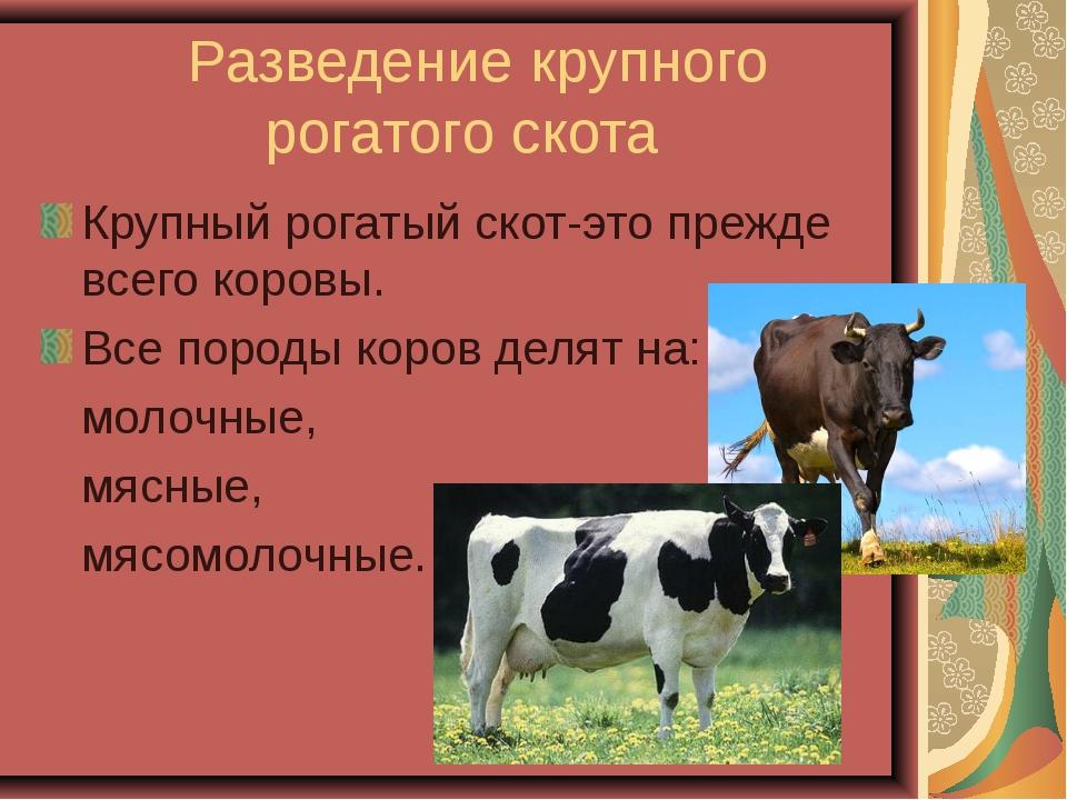 Разведение крупного рогатого скота Крупный рогатый скот-это прежде всего кор...