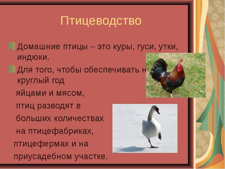 Птицеводство Домашние птицы – это куры, гуси, утки, индюки. Для того, чтобы...