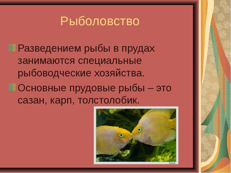 Рыболовство Разведением рыбы в прудах занимаются специальные рыбоводческие хо...