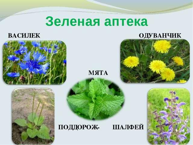 Зеленая аптека ВАСИЛЕК МЯТА ОДУВАНЧИК ПОДДОРОЖ- ШАЛФЕЙ НИК