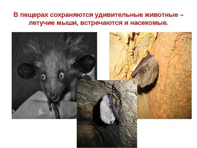 В пещерах сохраняются удивительные животные – летучие мыши, встречаются и нас...