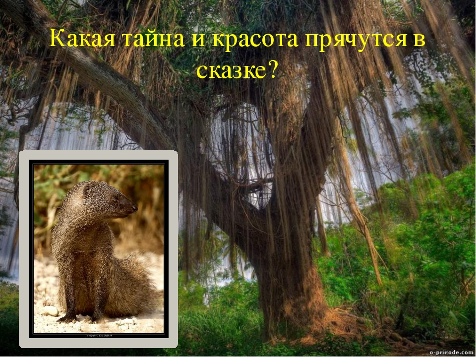Какая тайна и красота прячутся в сказке?