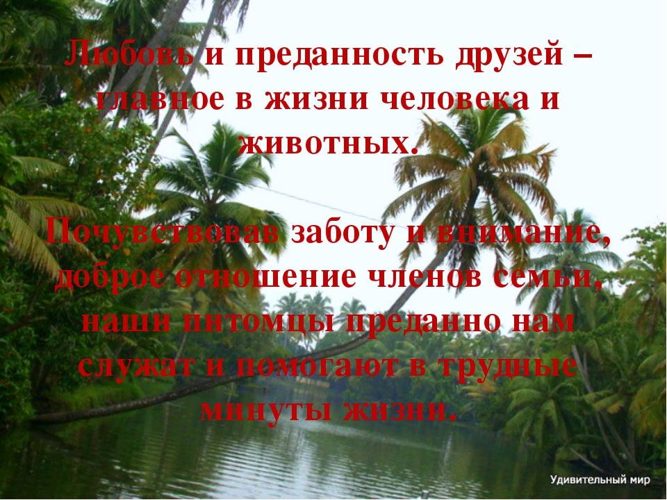 Любовь и преданность друзей – главное в жизни человека и животных. Почувствов...