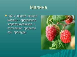 Малина Чай и настой плодов малины – прекрасное жаропонижающее и потогонное ср