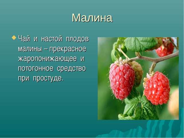 Малина Чай и настой плодов малины – прекрасное жаропонижающее и потогонное ср...