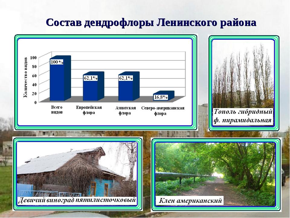 Состав дендрофлоры Ленинского района