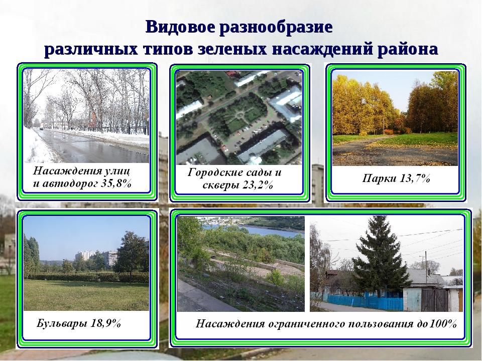 Видовое разнообразие различных типов зеленых насаждений района