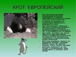 КРОТ ЕВРОПЕЙСКИЙ Крот обыкновенный широко распространен на большой территории