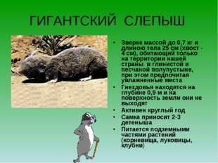 ГИГАНТСКИЙ СЛЕПЫШ Зверек массой до 0,7 кг и длиною тела 25 см (хвост - 4 см),