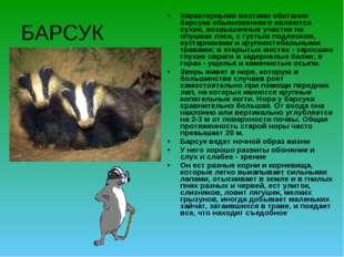БАРСУК Характерными местами обитания барсука обыкновенного являются сухие, во