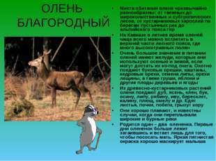 ОЛЕНЬ БЛАГОРОДНЫЙ Места обитания оленя чрезвычайно разнообразны: от таежных д