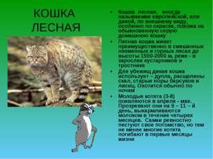 КОШКА ЛЕСНАЯ Кошка лесная, иногда называемая европейской, или дикой, по внешн