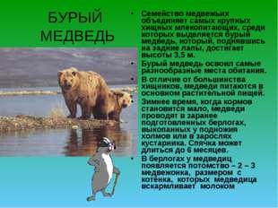 БУРЫЙ МЕДВЕДЬ Семейство медвежьих объединяет самых крупных хищных млекопитающ