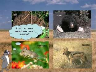 крот полёвка ёж шакал А кто из этих животных вам знаком?