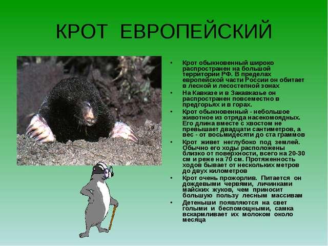 КРОТ ЕВРОПЕЙСКИЙ Крот обыкновенный широко распространен на большой территории...