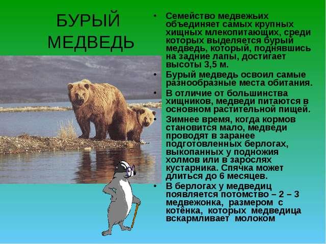 БУРЫЙ МЕДВЕДЬ Семейство медвежьих объединяет самых крупных хищных млекопитающ...