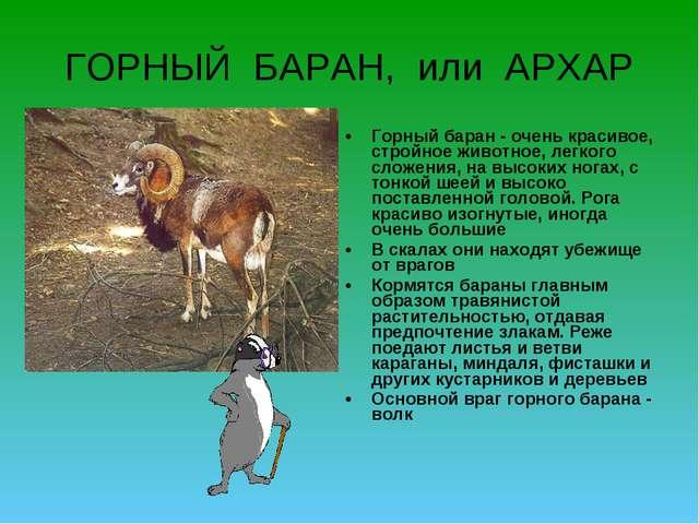 ГОРНЫЙ БАРАН, или АРХАР Горный баран - очень красивое, стройное животное, лег...