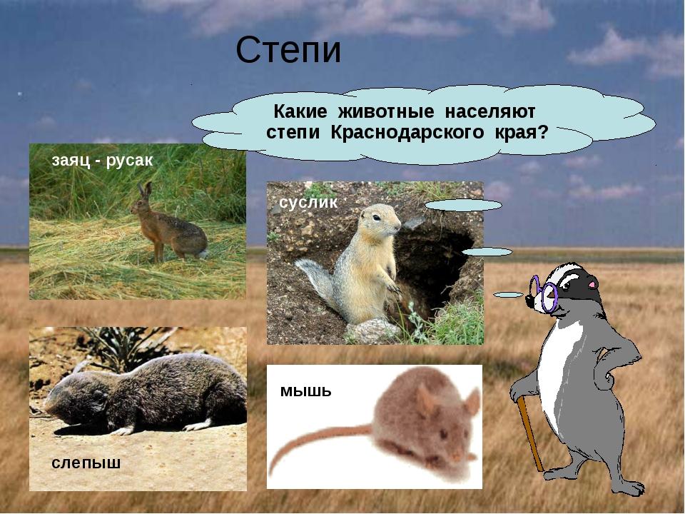 Степи Какие животные населяют степи Краснодарского края? заяц - русак суслик...