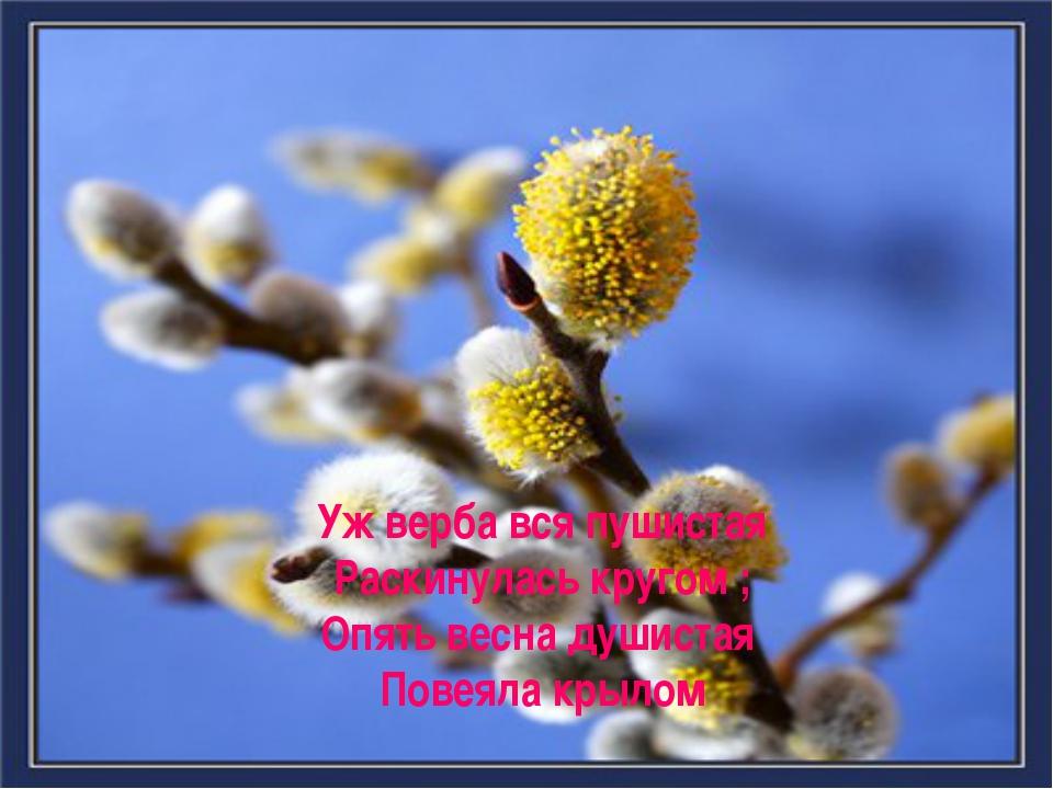 Уж верба вся пушистая Раскинулась кругом ; Опять весна душистая Повеяла крылом