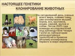 На сегодняшний день ученые всего мира, помимо овец, уже клонировали мышей, ко