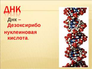 Днк – Дезоксирибо нуклеиновая кислота.