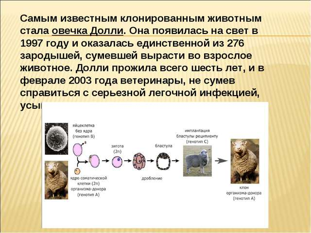 Самым известным клонированным животным стала овечка Долли. Она появилась на с...