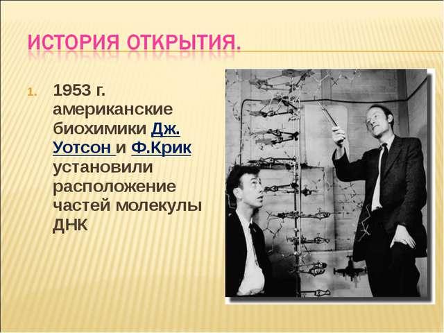 1953 г. американские биохимики Дж. Уотсон и Ф.Крик установили расположение ча...