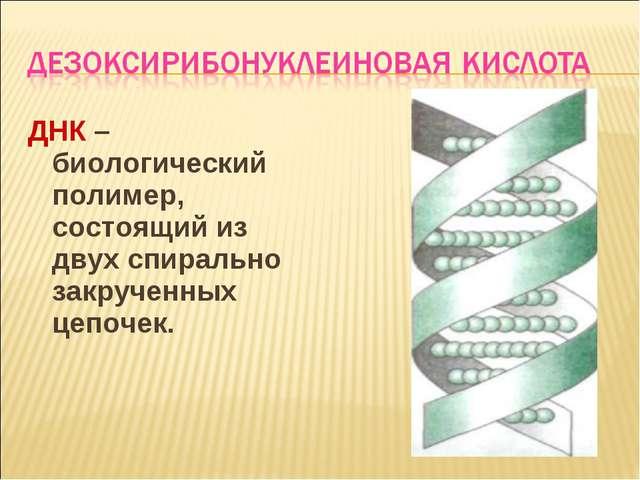 ДНК –биологический полимер, состоящий из двух спирально закрученных цепочек.