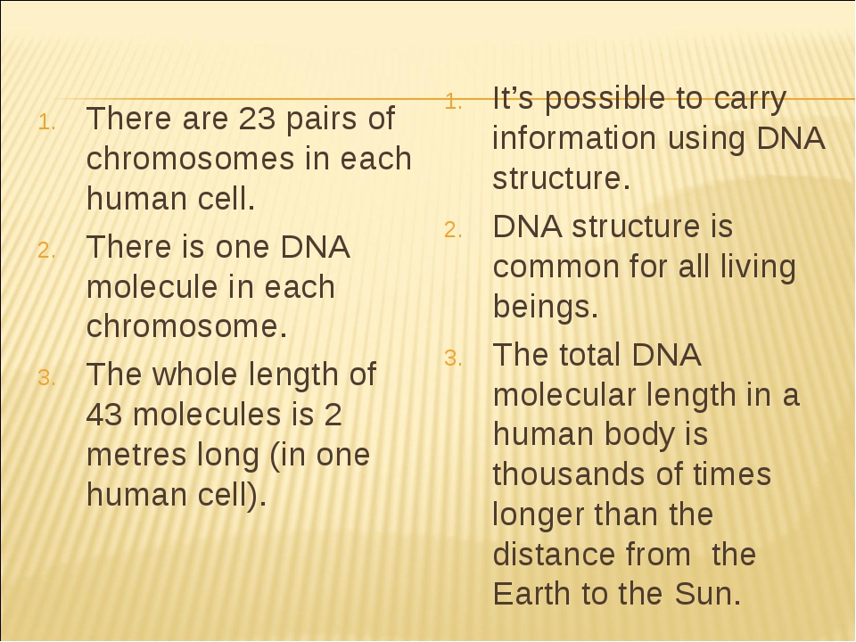 There are 23 pairs of chromosomes in each human cell. There is one DNA molecu...