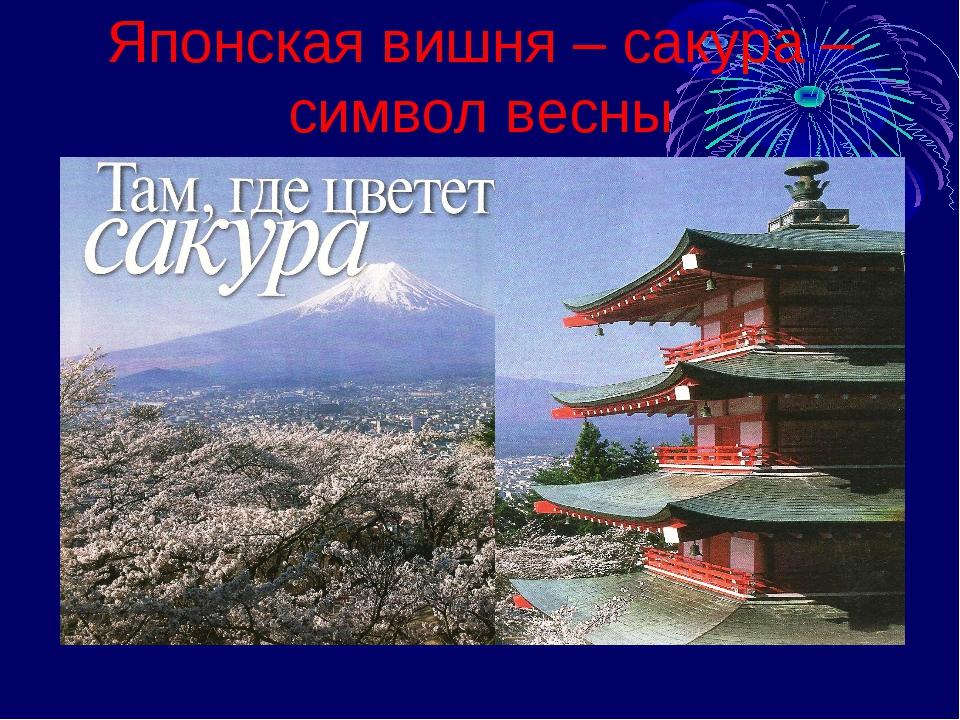 Японская вишня – сакура – символ весны
