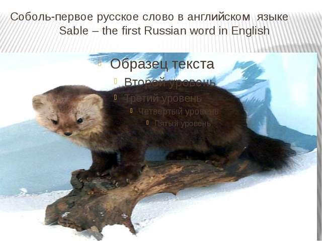 Соболь-первое русское слово в английском языке Sable – the first Russian word...