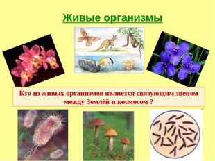 Живые организмы Кто из живых организмов является связующим звеном между Землё