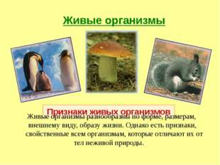 Живые организмы Признаки живых организмов Живые организмы разнообразны по фор