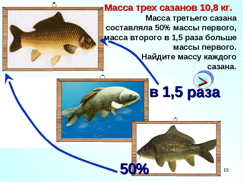 * Масса трех сазанов 10,8 кг. Масса третьего сазана составляла 50% массы перв...