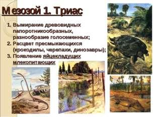Мезозой 1. Триас Вымирание древовидных папоротникообразных, разнообразие голо