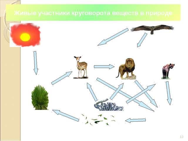 * Растения (производители) Растительноядные (первичные потребители) Хищники (...