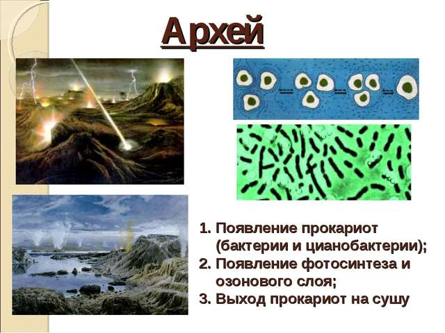 Архей Появление прокариот (бактерии и цианобактерии); Появление фотосинтеза и...