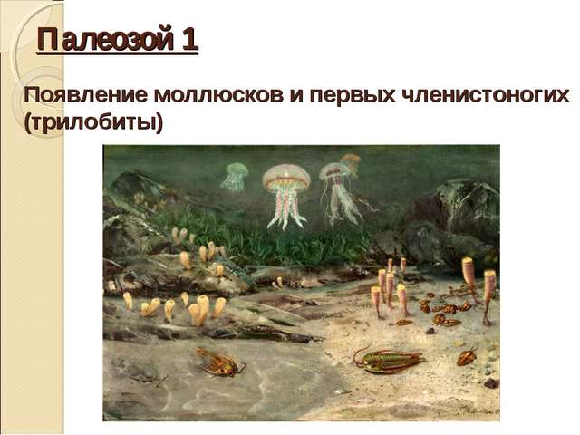 Палеозой 1 Появление моллюсков и первых членистоногих (трилобиты)