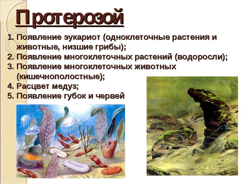Протерозой Появление эукариот (одноклеточные растения и животные, низшие гриб...