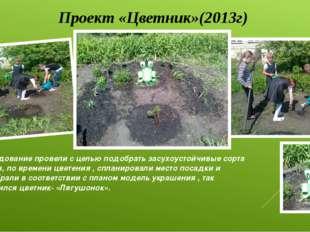 Проект «Цветник»(2013г) Исследование провели с целью подобрать засухоустойчив