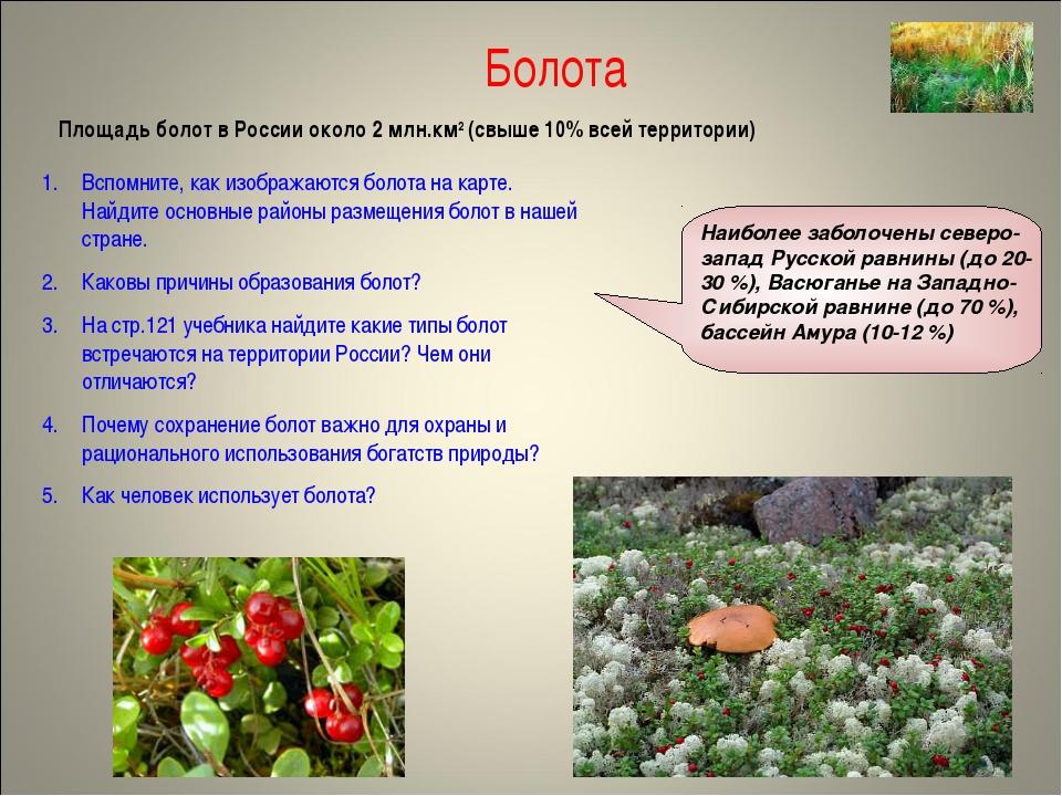 Болота Площадь болот в России около 2 млн.км2 (свыше 10% всей территории) Всп...