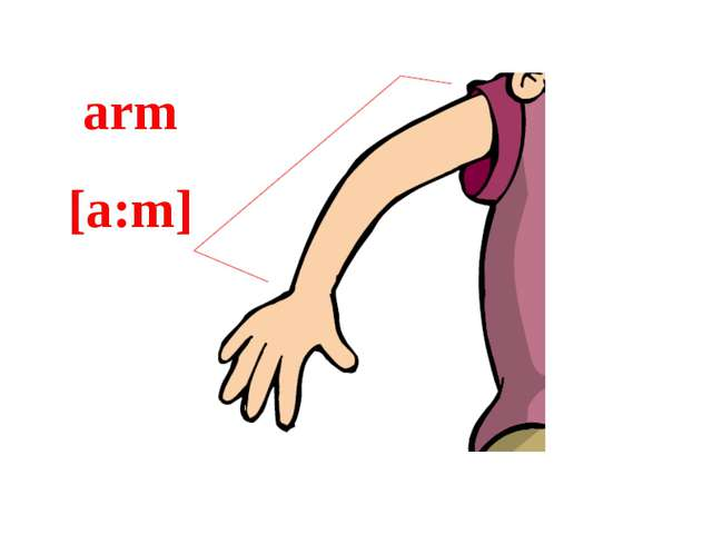 arm [a:m]