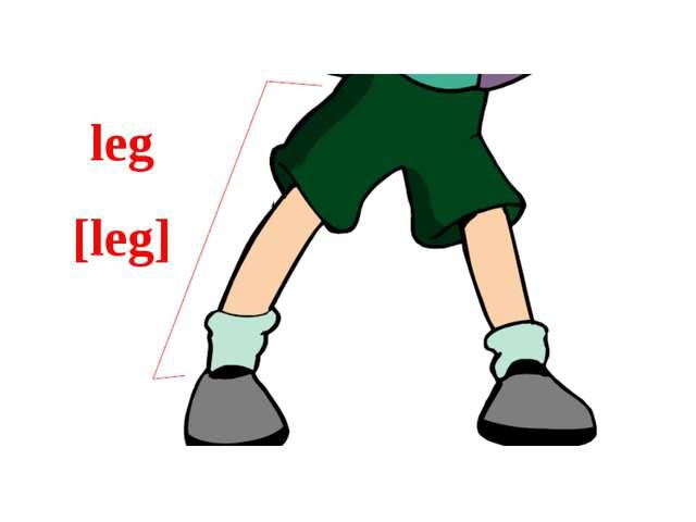 leg [leg]