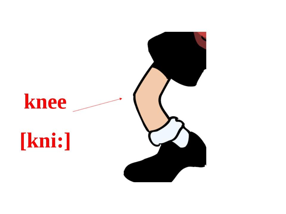 knee [kni:]