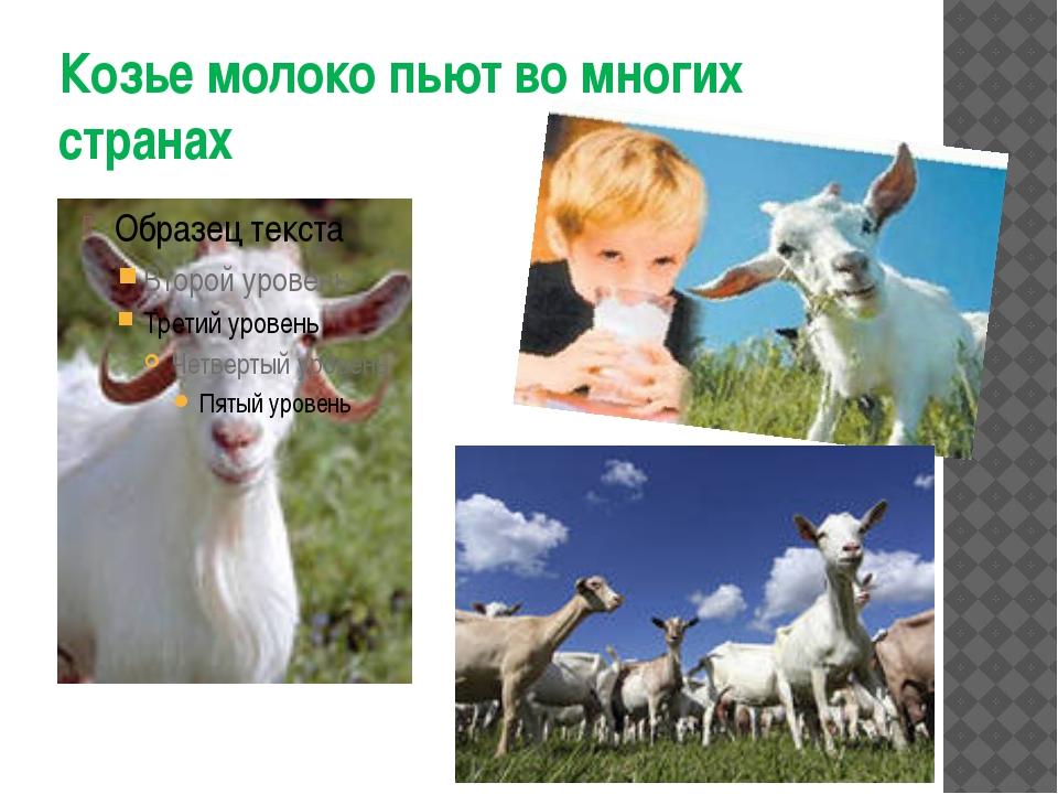 Козье молоко пьют во многих странах