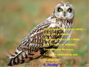 Мудрейшая птица на свете — Сова. Все слышит, Но очень скупа на слова. Чем бо