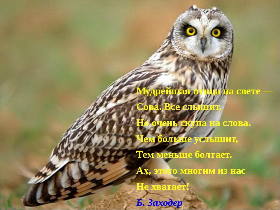 Мудрейшая птица на свете — Сова. Все слышит, Но очень скупа на слова. Чем бо...