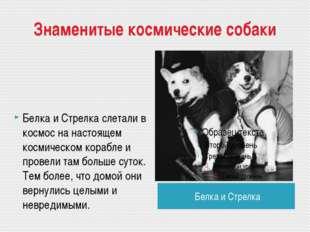 Знаменитые космические собаки Белка и Стрелка Белка и Стрелка слетали в космо